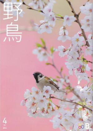 Yachomagazine140324