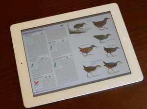 Birdsofaisia150131jpg