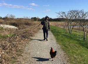 Chicken151228