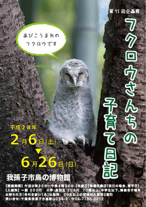 Owl160204_1_2