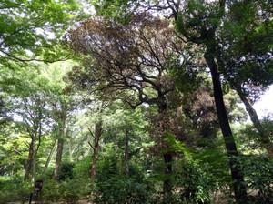Tree180912