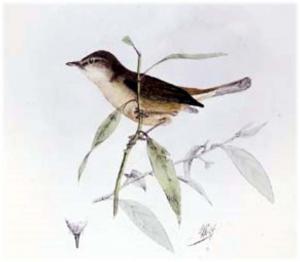 Bushwarbler